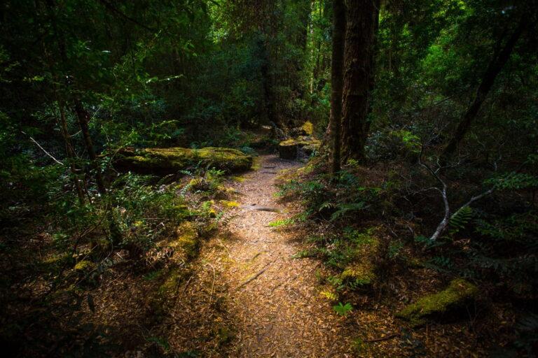 Styx Big Tree Reserve