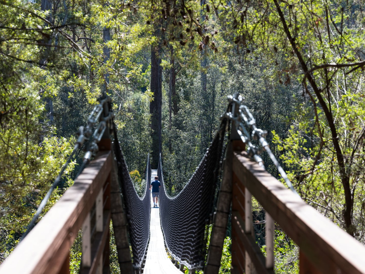 Swinging Bridges Walk - Tahune Adventures